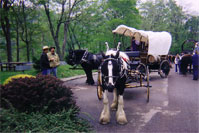 Molly participates in the National Pike Wagon Train 2002.  She of course was the only Gypsy Horse in attendance.