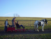 Gypsy Horses Molly adn Angel being worked on the pulling sled as a team.  Freddie, Mason and Daniel on the sled.